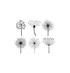 set of 6 linear dandelion flowers with vector image