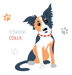 funny border collie tricoloured dog sitting vector image vector image