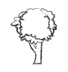 tree natural foliage image sketch vector image vector image