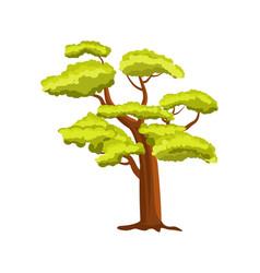 beech green tree icon vector image