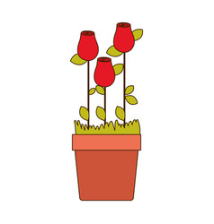 Colorful rosebuds planted with leaves in flowerpot vector