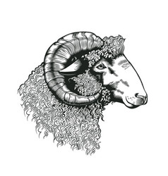 head of ram hand drawn in antique etching style vector image