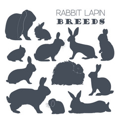 Rabbit lapin breed icon set flat design vector