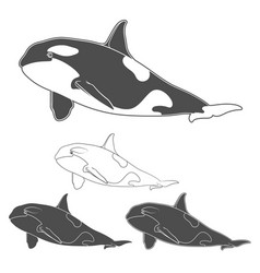 Set of black and white killer whale images vector