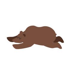 sleeping bear wild animal sleeps sleepy grizzly vector image
