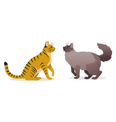 two cats - smooth coated ginger cat with vector image