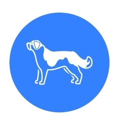 St Bernard dog icon in black style for web vector image