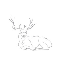 deer lies lines vector image