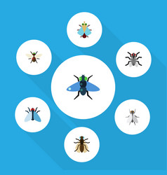 Flat icon fly set of dung hum mosquito and other vector