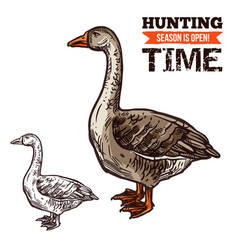 goose wild bird sketch for hunting sport design vector image