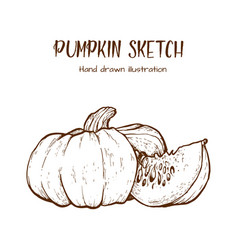 pumpkin drawing set vector image
