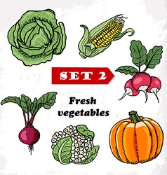 Set 2 Fresh vegetables cabbage corn radish pumpkin vector