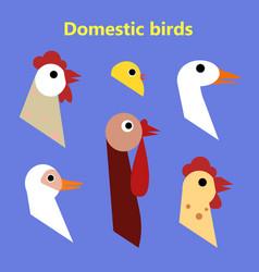 set of domestic birds heads vector image