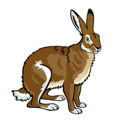 Sitting hare vector