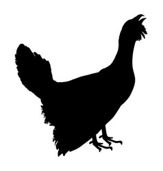 Wood grouse silhouette blackcock symbol vector