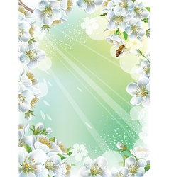 Frame with cherry blossom vector image vector image