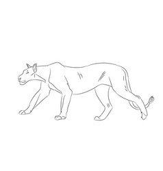 lioness with lines sketch vector image vector image