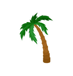Big palm tree with green leaves and brown trunk vector