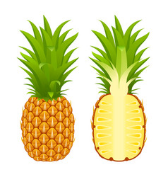 Pineapple and half on white vector