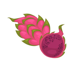 pitaya whole and half isolated on white ripe vector image