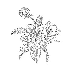 apple floral ornament vector image