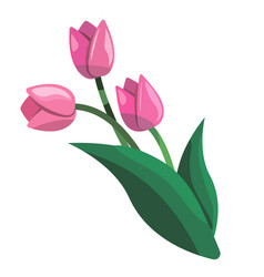 cute bouquet of tulips vector image