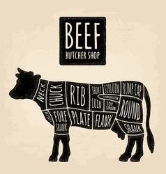 cuts cow meat beef handwriting lettering vector image