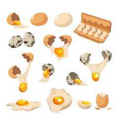 Eggs chicken and quail cracked shell and yolk vector