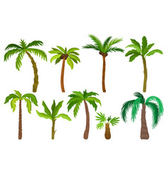 flat set of palm trees plants of tropical vector image