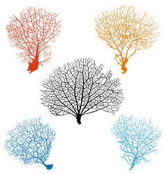 sea fan corals set vector image