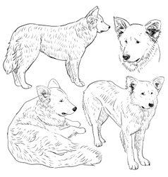 Set shepherd dog sketch Black contour on a white vector image