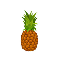whole pineapple with tuft of green stiff leaves vector image