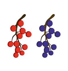 Currant berries vector