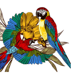 engraved background with colorful tropical parrots vector image