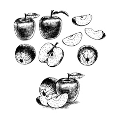 Hand drawn set of apples sketch vector image