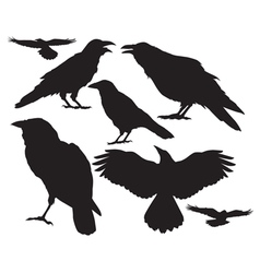 raven silhouette vector image