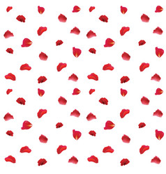 red rose petals pattern fabric on white background vector image