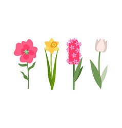 tulip and daffodil flowers set pink hyacinth vector image