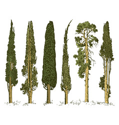 big set engraved hand drawn tree include pine vector image