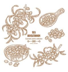 hand drawn sea buckthorn branch sea buckthorn vector image