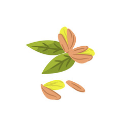 Pistachio nuts cartoon vector