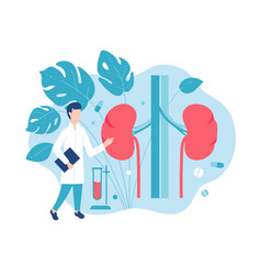 urology and kidney disease consultation with a vector image