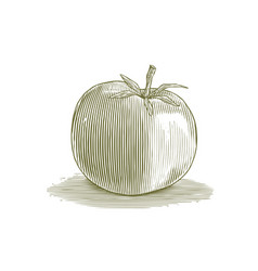 woodcut tomato vector image vector image