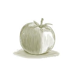 woodcut tomato vector image