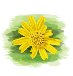 Close up yellow wild daisy with watercolor vector