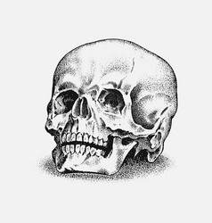 human skull in vintage style retro old school vector image