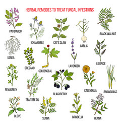 best herbal remedies for fungal infections vector image