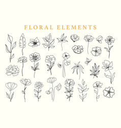 Floral elements set botanical drawings vector