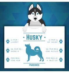 Husky dog banner vector