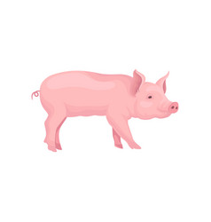 Portrait of standing pig side view vector